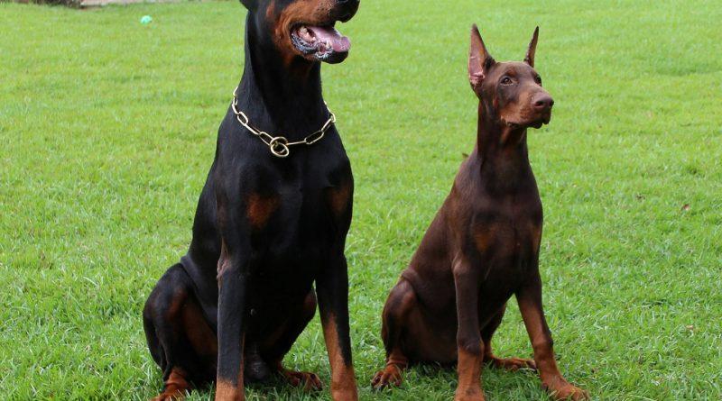 Pourquoi avoir des vêtements de sécurité pour maître chien ?